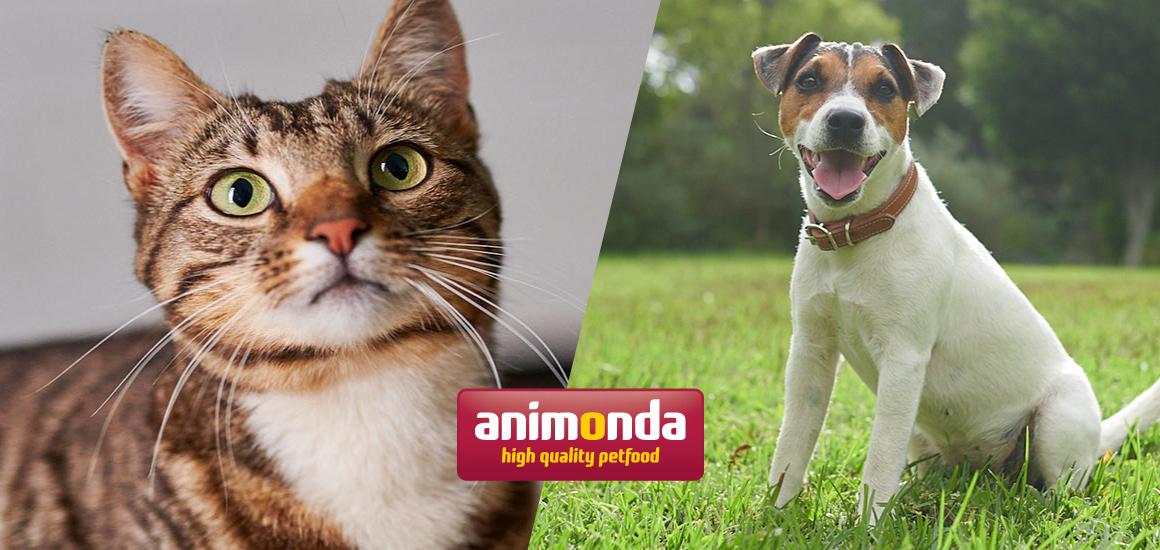 アニモンダ公式サイト『犬・猫を飼うための基礎知識』公開のご案内