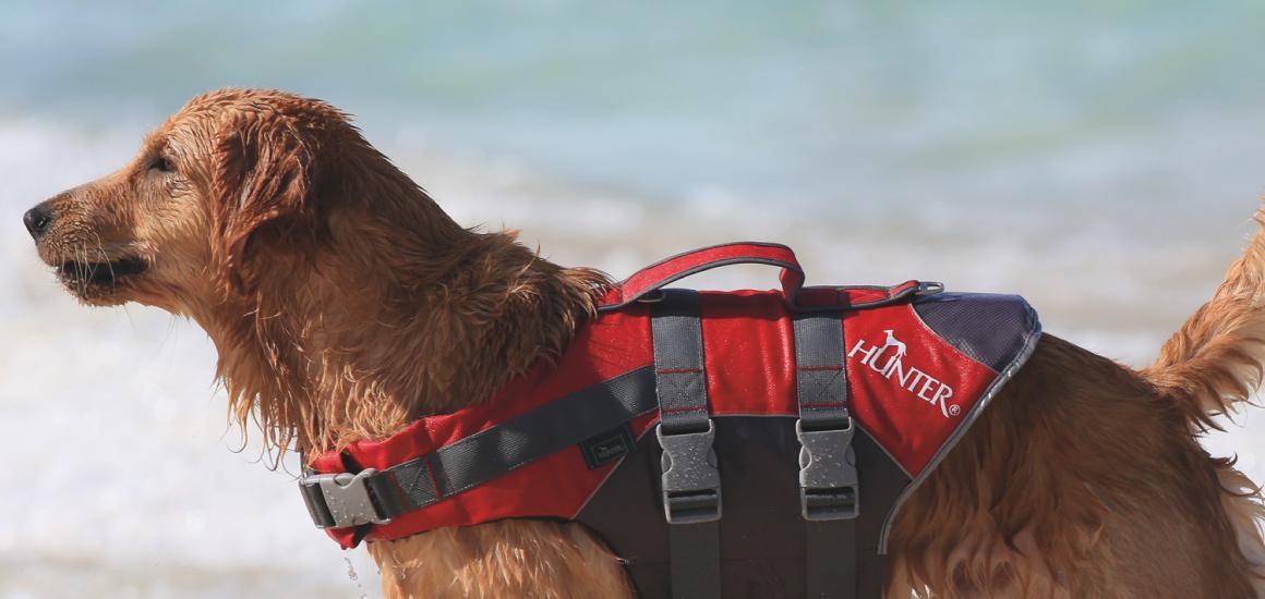 これからの季節に!犬用ライフジャケット『モス』