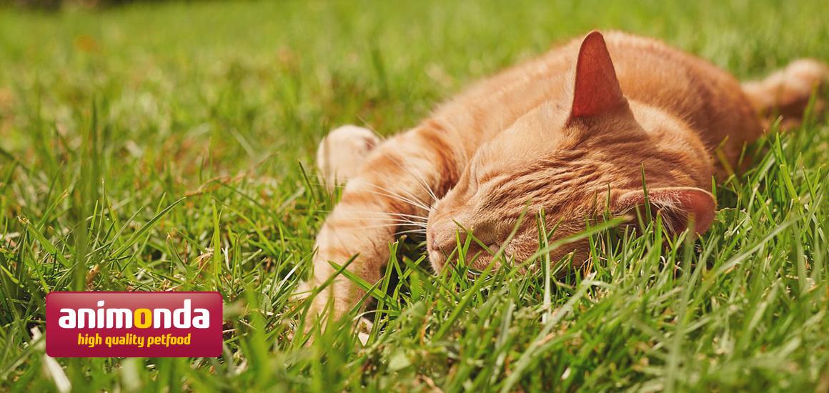 アニモンダ公式サイト『犬・猫を飼うための基礎知識』のご案内(7月5日最新)