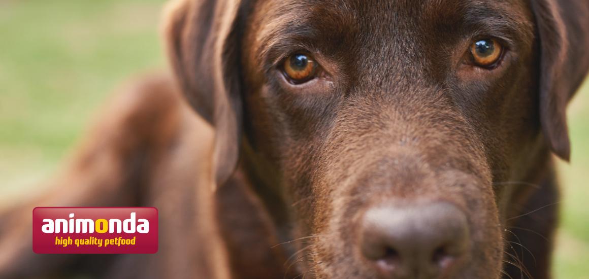 アニモンダ公式サイト『犬・猫を飼うための基礎知識』
